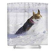 Pitt Bull Snow Plow Shower Curtain