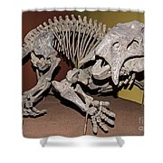 Placerias Fossil Shower Curtain