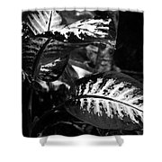 Plant 8658 Shower Curtain