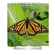 Plant Milkweed And Save The Monarch Butterfly Shower Curtain