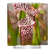 Plant - Pretty As A Pitcher Plant Shower Curtain