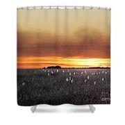 Plant Rd Lacassine Nwr Louisiana Shower Curtain