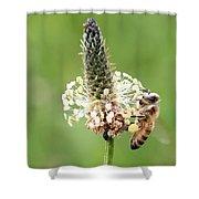 Plantain Pollen Shower Curtain