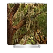 Plantation Oak Trees Shower Curtain