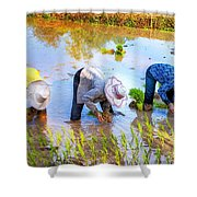 Planting Rice Shower Curtain