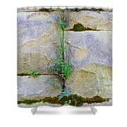 Plants In The Brick Wall Shower Curtain