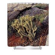 Plants On A Landscape, Anza Borrego Shower Curtain
