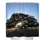 Plateau Oak Tree Shower Curtain