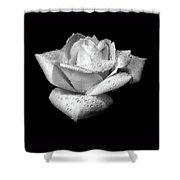 Platinum Rose Flower Shower Curtain