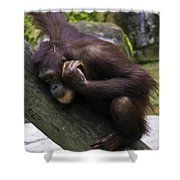 Play Day Shower Curtain