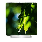 Play Of Light On Maple Leaves Shower Curtain