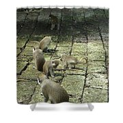 Green Monkey Play Time Shower Curtain