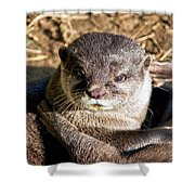 Play Time For Otters Shower Curtain