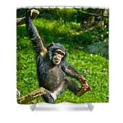 Playful Chimp Shower Curtain