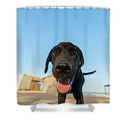 Playful Dog Closeup Shower Curtain