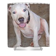 Playful Pitbull Puppy Haaweo Shower Curtain