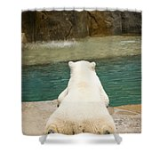 Playful Polar Bear Shower Curtain by Adam Romanowicz
