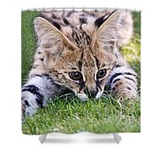 Playful Serval Shower Curtain
