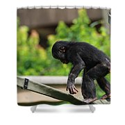 Playful Young Monkey Shower Curtain