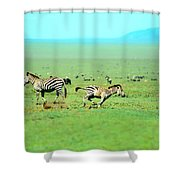 Playfull Zebras Shower Curtain