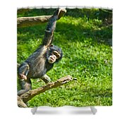 Playing Chimp Shower Curtain