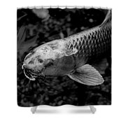 Playing Koi Shower Curtain