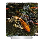 Playing Koi With Me Shower Curtain