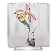 Pleione Zeus Wildstein Shower Curtain