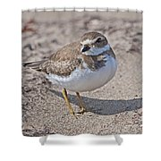 Plover Lover.. Shower Curtain