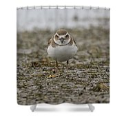 Plover Shower Curtain