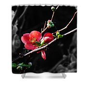 Plum Blossom 3 Shower Curtain