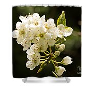 Plum Blossom Shower Curtain
