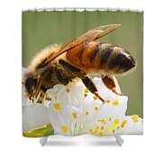 Plum Full Of Bees Shower Curtain