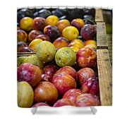 Plum Gorgeous Shower Curtain by Caitlyn  Grasso