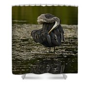 Plumage Perfection Shower Curtain