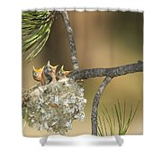 Plumbeous Vireo Begging Arizona Shower Curtain by Tom Vezo