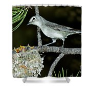 Plumbeous Vireo With Four Chicks In Nest Shower Curtain