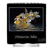 Plumeria Alba Shower Curtain