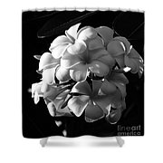 Plumeria Black White Shower Curtain