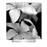 Plumeria Drip Shower Curtain