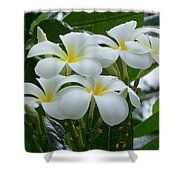 Plumeria In The Rain Shower Curtain
