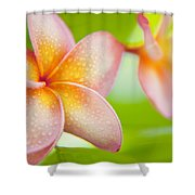 Plumeria Pastels Shower Curtain