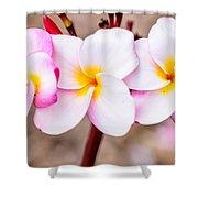 Plumerias Of Paradise 10 Shower Curtain