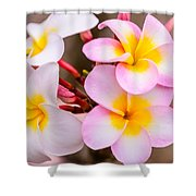 Plumerias Of Paradise 12 Shower Curtain