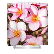 Plumerias Of Paradise 2 Shower Curtain