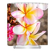 Plumerias Of Paradise 4 Shower Curtain