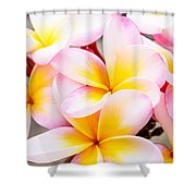 Plumerias Of Paradise 6 Shower Curtain
