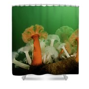 Plumose Anemone In Puget Sound Shower Curtain