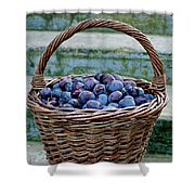 Plums In A Basket, Southern Bohemia Shower Curtain