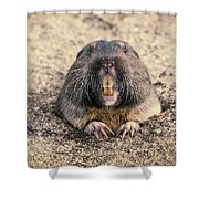 Pocket Gopher Chatting Shower Curtain